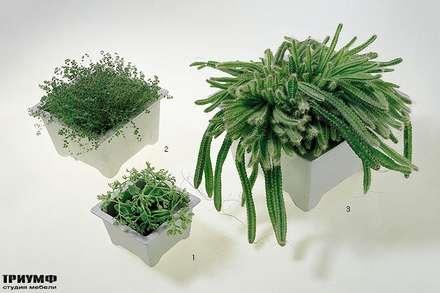 Итальянская мебель Driade - Кашпо под цветы Cache-pots