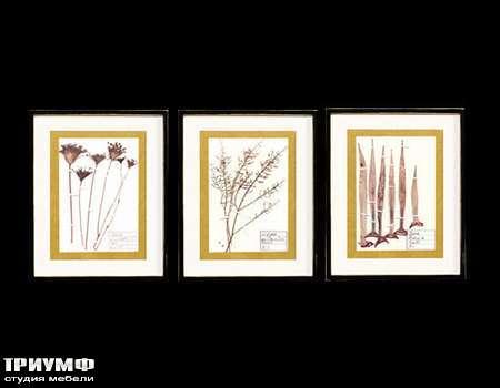 Итальянская мебель Cantori - коллекция Grass
