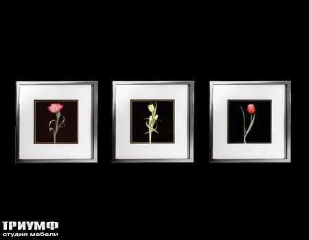 Итальянская мебель Cantori - коллекция Tulipani piccoli