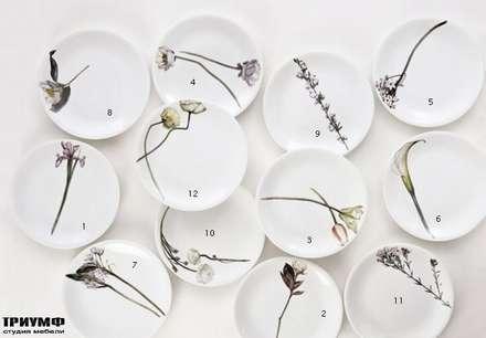 Итальянская мебель Driade - Тарелки с цветами